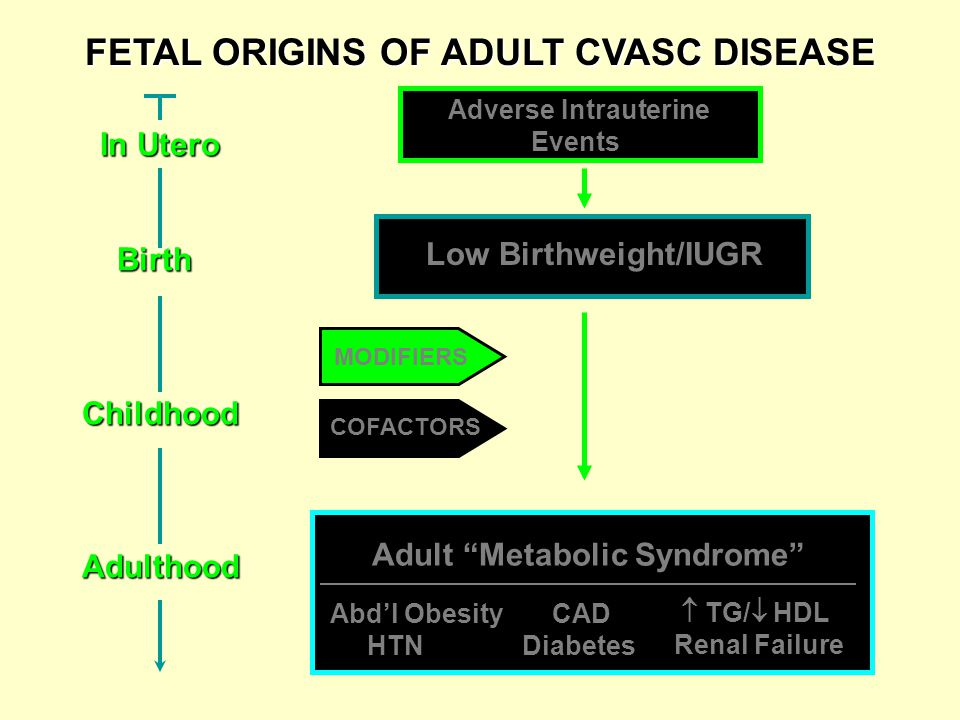 FETAL ORIGINS OF ADULT CVASC DISEASE MODIFIERS COFACTORS Low Birthweight/IUGR Adverse Intrauterine Events Adult Metabolic Syndrome Abd'l Obesity HTN CAD Diabetes  TG/  HDL Renal Failure In Utero In Utero Birth BirthChildhoodAdulthood