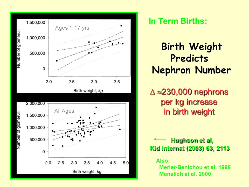 Birth Weight Predicts Nephron Number   230,000 nephrons per kg increase in birth weight In Term Births: Ages 1-17 yrs All Ages Hughson et al, Kid Internat (2003) 63, 2113 Also: Merlet-Benichou et al, 1999 Manalich et al, 2000