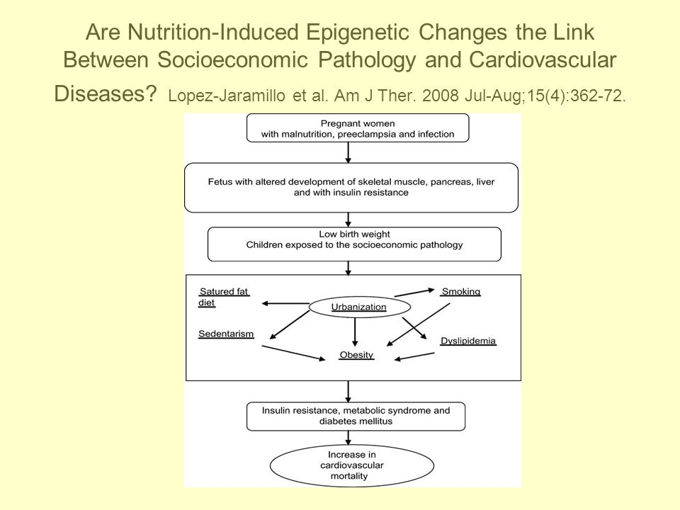 Are Nutrition-Induced Epigenetic Changes the Link Between Socioeconomic Pathology and Cardiovascular Diseases.