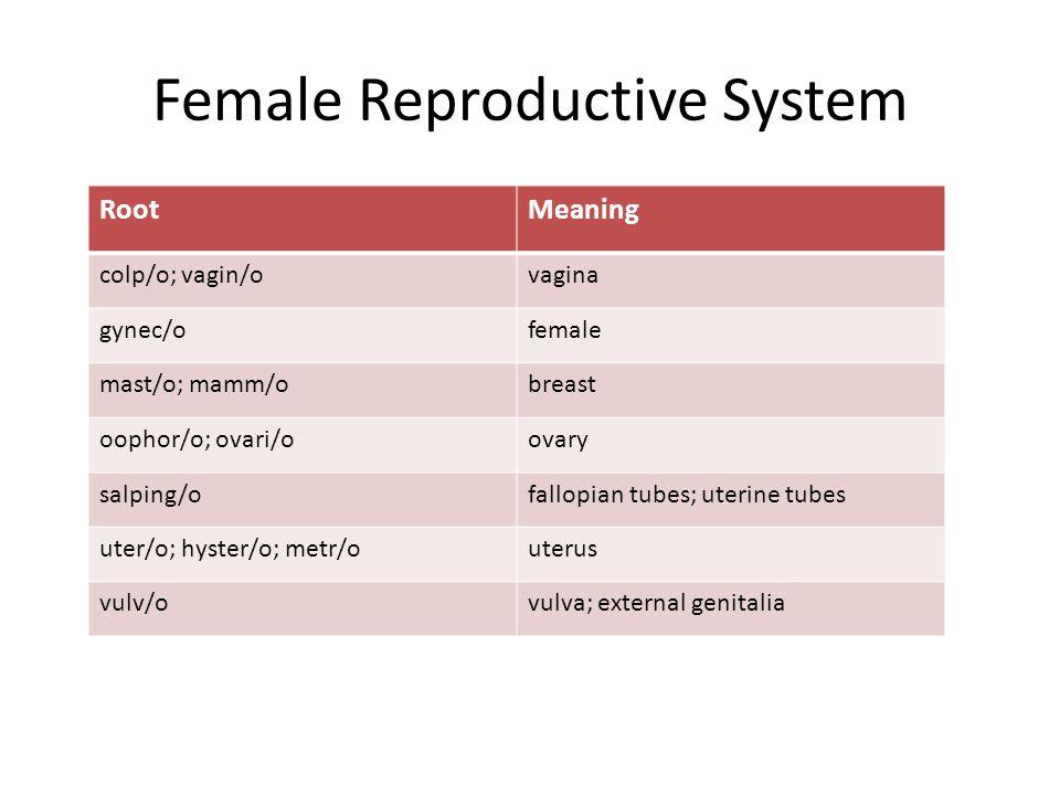 Female Reproductive System RootMeaning colp/o; vagin/ovagina gynec/ofemale mast/o; mamm/obreast oophor/o; ovari/oovary salping/ofallopian tubes; uterine tubes uter/o; hyster/o; metr/outerus vulv/ovulva; external genitalia