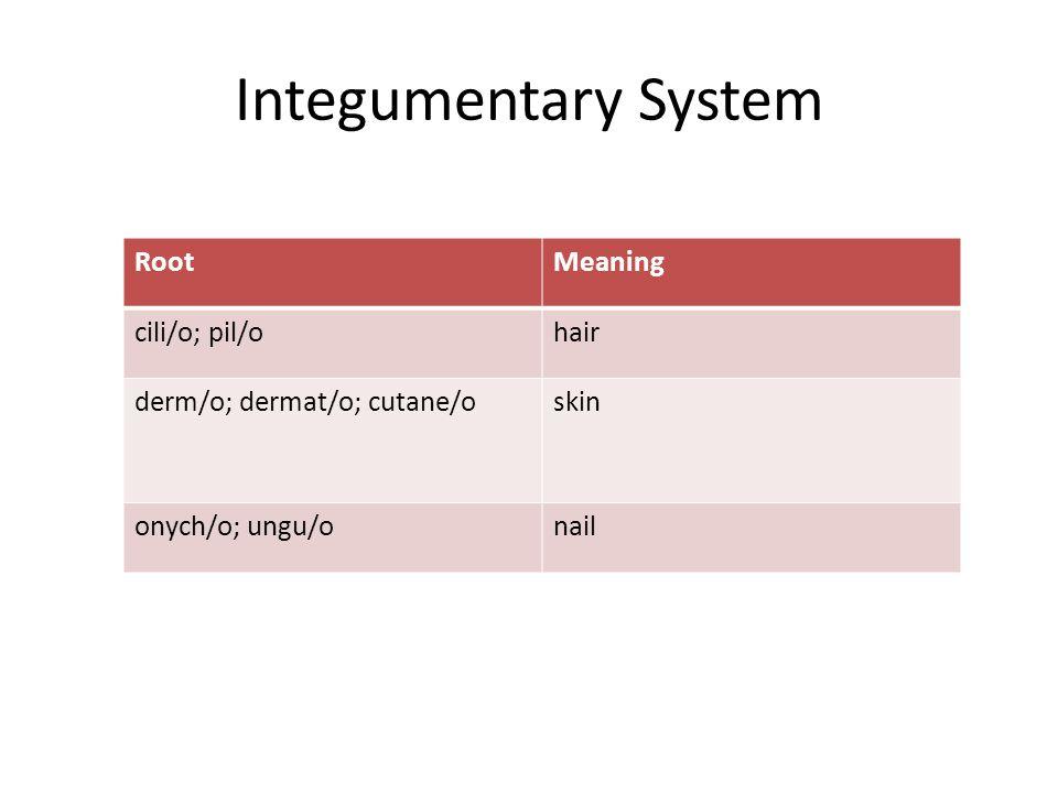 Integumentary System RootMeaning cili/o; pil/ohair derm/o; dermat/o; cutane/oskin onych/o; ungu/onail