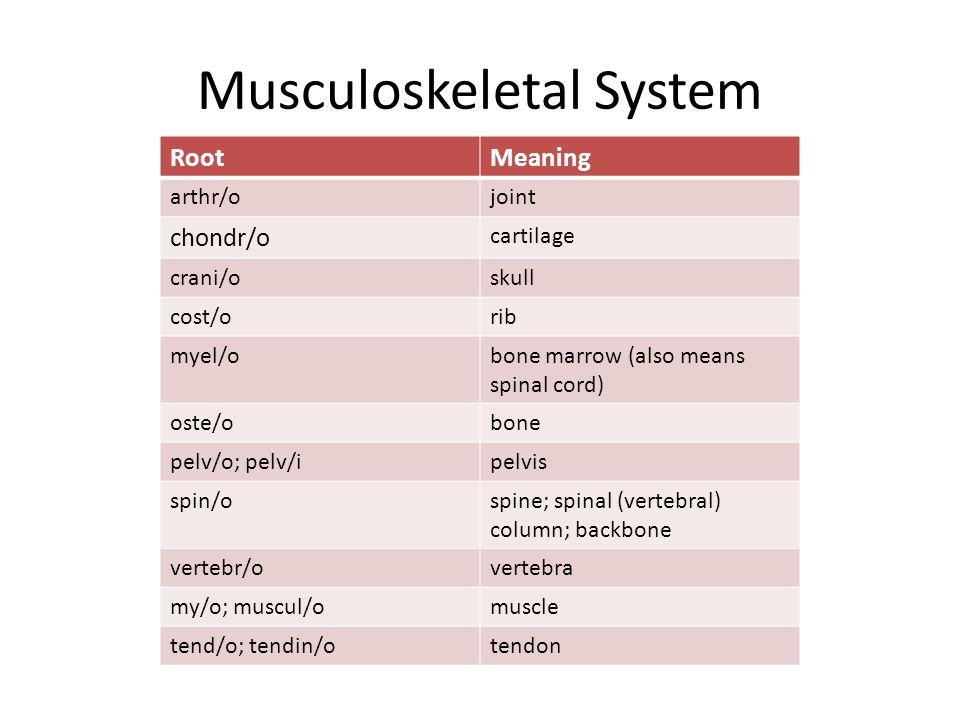 Musculoskeletal System RootMeaning arthr/ojoint chondr/o cartilage crani/oskull cost/orib myel/obone marrow (also means spinal cord) oste/obone pelv/o; pelv/ipelvis spin/ospine; spinal (vertebral) column; backbone vertebr/overtebra my/o; muscul/omuscle tend/o; tendin/otendon