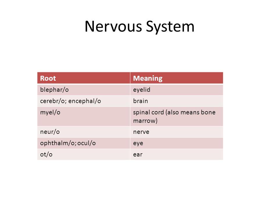 Nervous System RootMeaning blephar/oeyelid cerebr/o; encephal/obrain myel/ospinal cord (also means bone marrow) neur/onerve ophthalm/o; ocul/oeye ot/oear