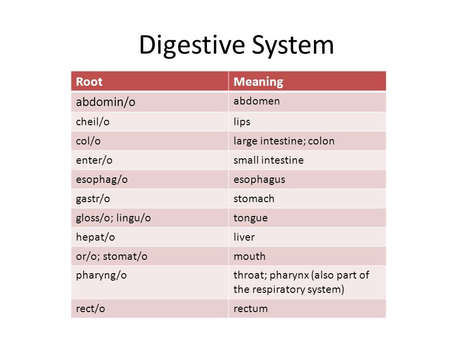 Digestive System RootMeaning abdomin/o abdomen cheil/olips col/olarge intestine; colon enter/osmall intestine esophag/oesophagus gastr/ostomach gloss/o; lingu/otongue hepat/oliver or/o; stomat/omouth pharyng/othroat; pharynx (also part of the respiratory system) rect/orectum