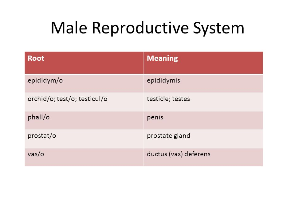 Male Reproductive System RootMeaning epididym/oepididymis orchid/o; test/o; testicul/otesticle; testes phall/openis prostat/oprostate gland vas/oductus (vas) deferens