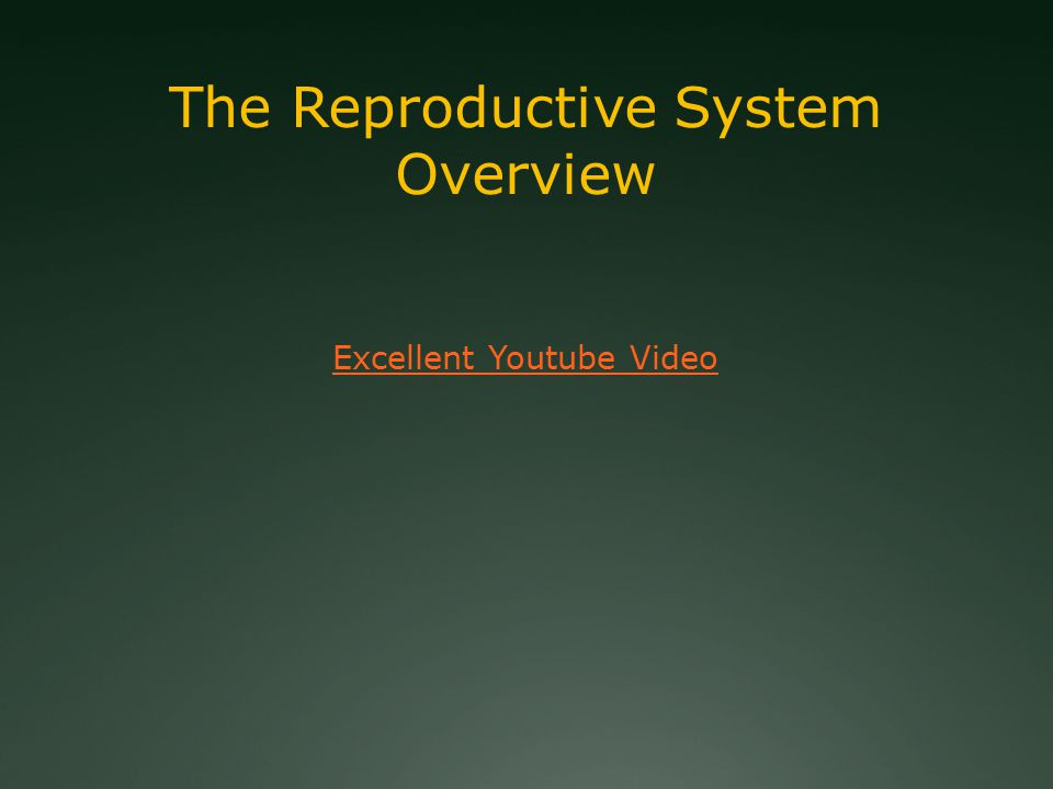 The Reproductive System Overview Excellent Youtube Video