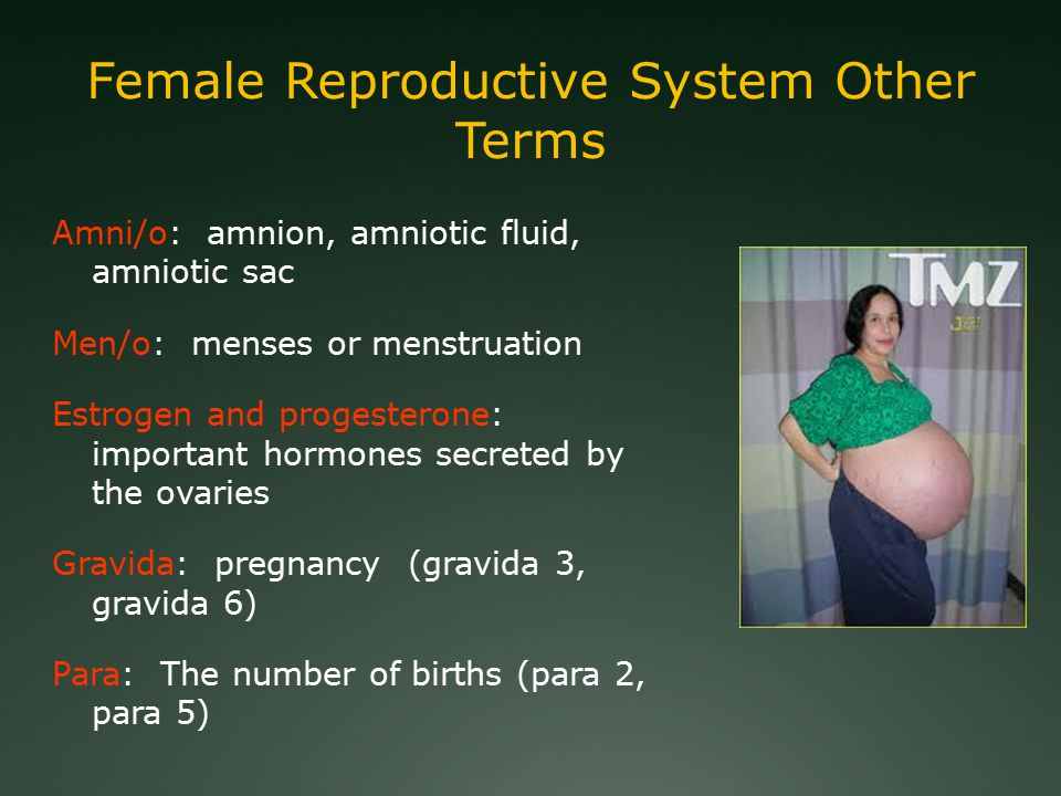 Female Reproductive System Other Terms Amni/o: amnion, amniotic fluid, amniotic sac Men/o: menses or menstruation Estrogen and progesterone: important hormones secreted by the ovaries Gravida: pregnancy (gravida 3, gravida 6) Para: The number of births (para 2, para 5)