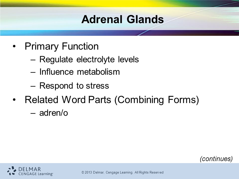 © 2013 Delmar, Cengage Learning. All Rights Reserved Adrenal Glands Primary Function –Regulate electrolyte levels –Influence metabolism –Respond to st