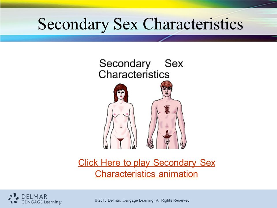 © 2013 Delmar, Cengage Learning. All Rights Reserved Secondary Sex Characteristics Click Here to play Secondary Sex Characteristics animation
