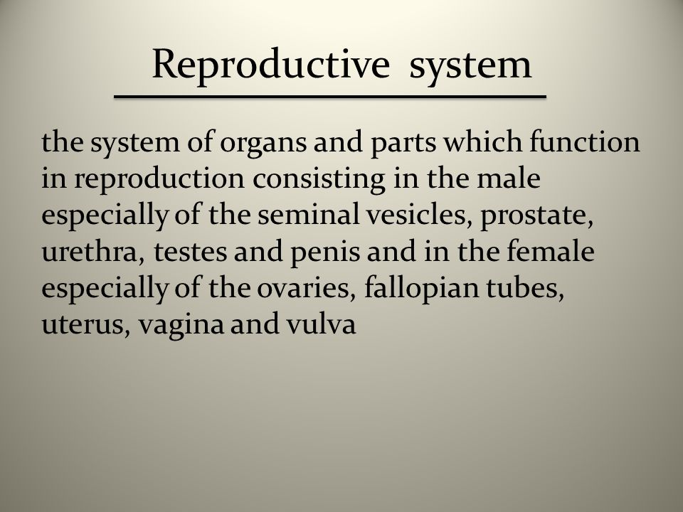 Root of Male Genital System
