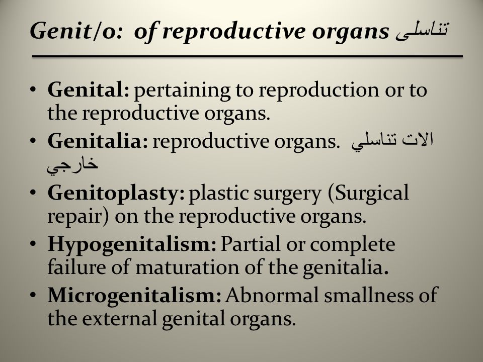 Roots of Female Genital System