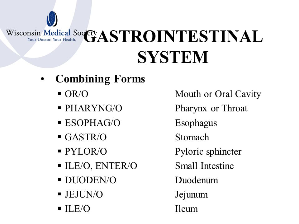 GASTROINTESTINAL SYSTEM Additional Terms –Bile or Biliary –Peristalsis