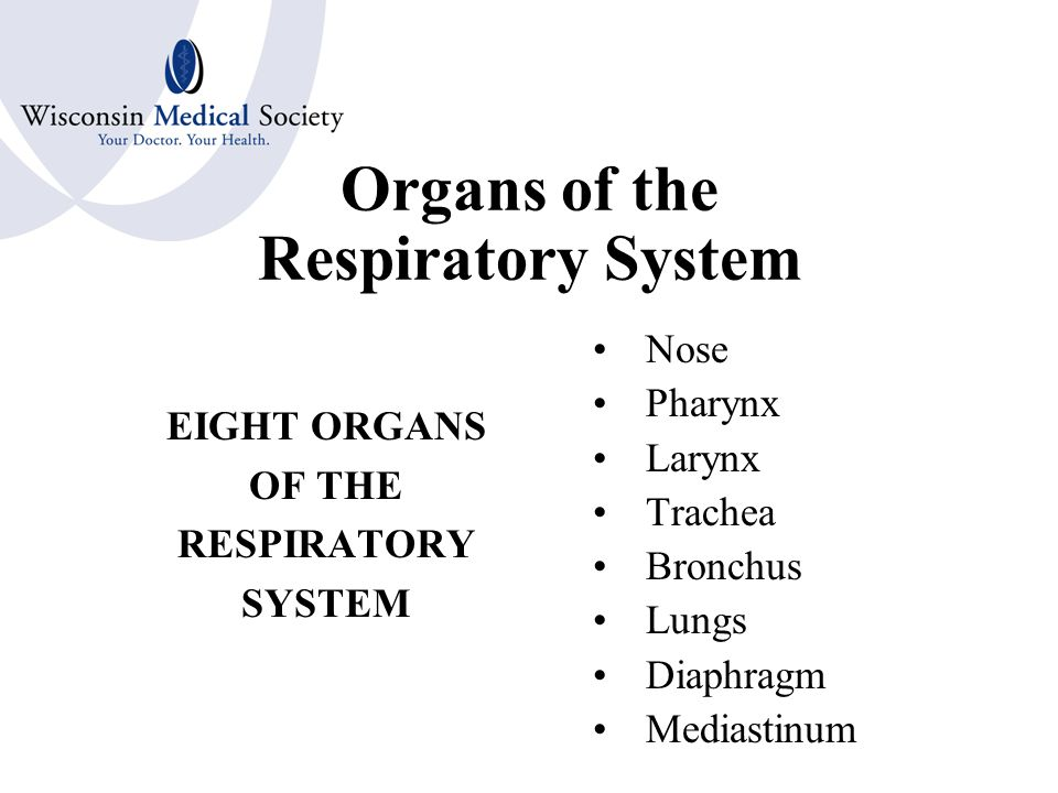 RESPIRATORY SYSTEM Provides oxygen to all body cells through blood Exchanges oxygen for carbon dioxide Eliminates carbon dioxide from the body