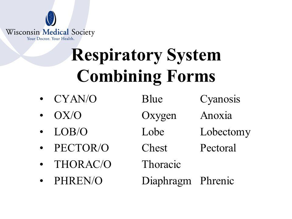Respiratory System Combining Forms TRACHE/OTrachea BRONCH/OBronchus BRONCH/I BRONCHIOL/IBronchiole ALVEOL/OAlveolus