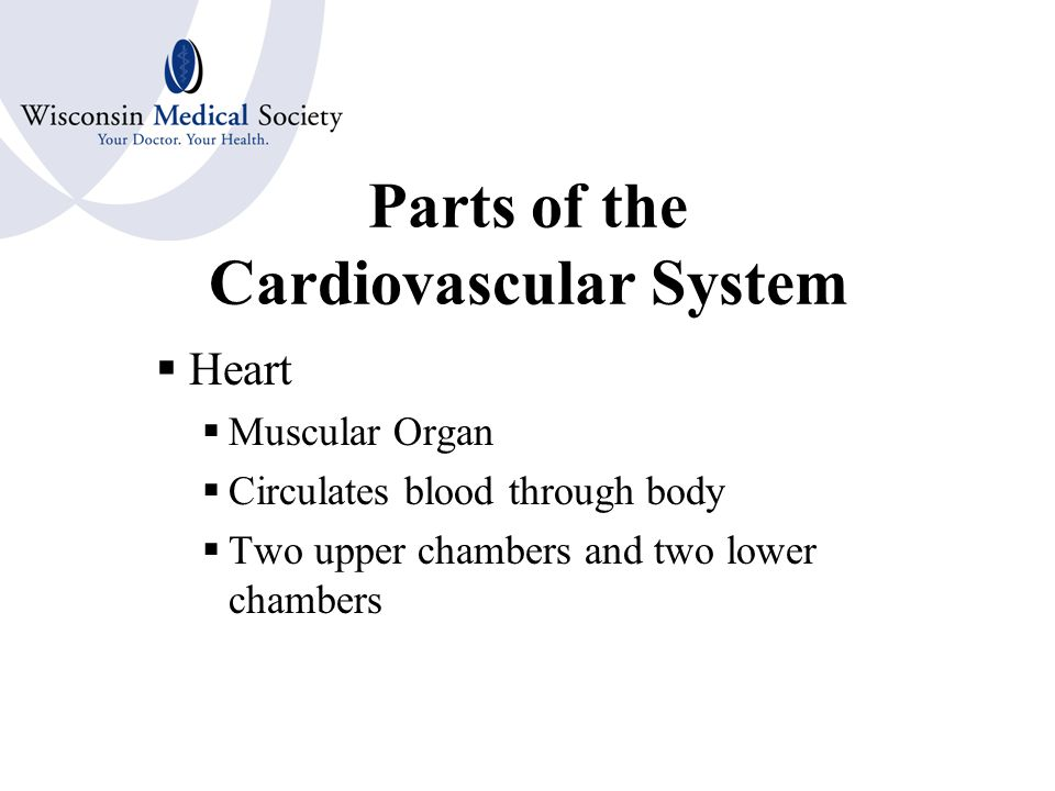 CARDIOVASCULAR SYSTEM Circulatory System Continually moves blood throughout the body in order to provide oxygen, hormones and nutrients to the body tissue Removes waste material