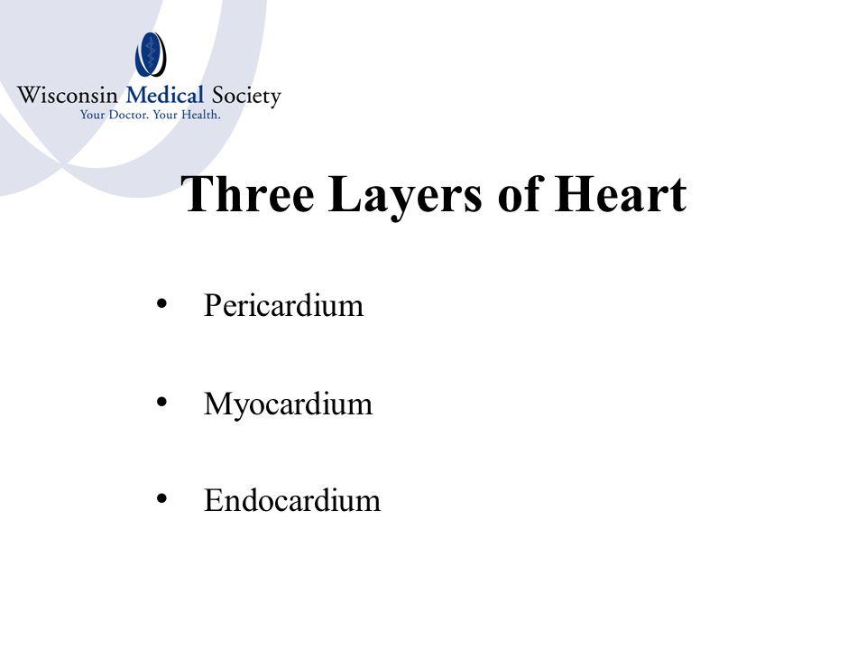 Cardiovascular - Valves Tricuspid Valve Bicuspid Valve Semilunar Valves