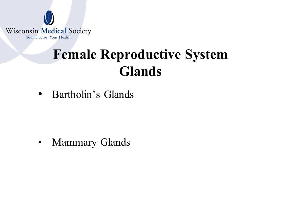 Female Reproductive System Internal Organs Ovaries  Ovum  Graafian Follicles Fallopian tubes or uterine tubes Uterus  Endometrium  Cervix Vagina  Hymen Rectouterine Pouch