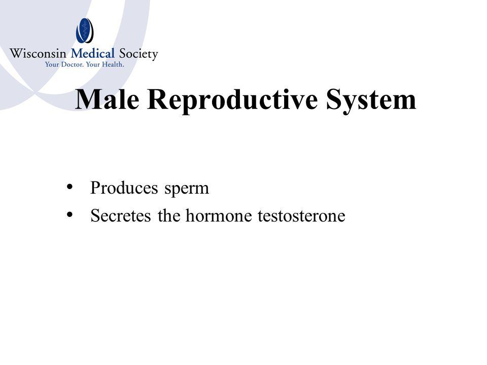 1.Mamm/o 2.Mast/o 3.Vagin/o 4.Hyster/o 5.Oophor/o 6.Episi/o 7.Salping/o 8.Colp/o 1.Breast 2.Breast 3.Vagina 4.Uterus 5.Ovary 6.Vulva 7.Fallopian Tubes 8.Vagina