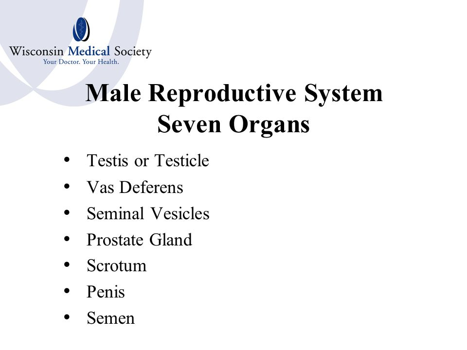 Male Reproductive System Produces sperm Secretes the hormone testosterone
