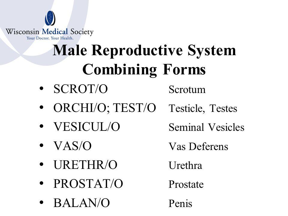 Male Reproductive System Seven Organs Testis or Testicle Vas Deferens Seminal Vesicles Prostate Gland Scrotum Penis Semen