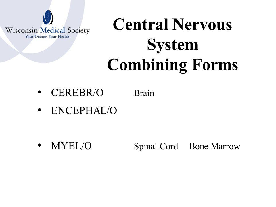 Peripheral Nervous System Organs Nerve –Cranial Nerves –Spinal Nerves Ganglion