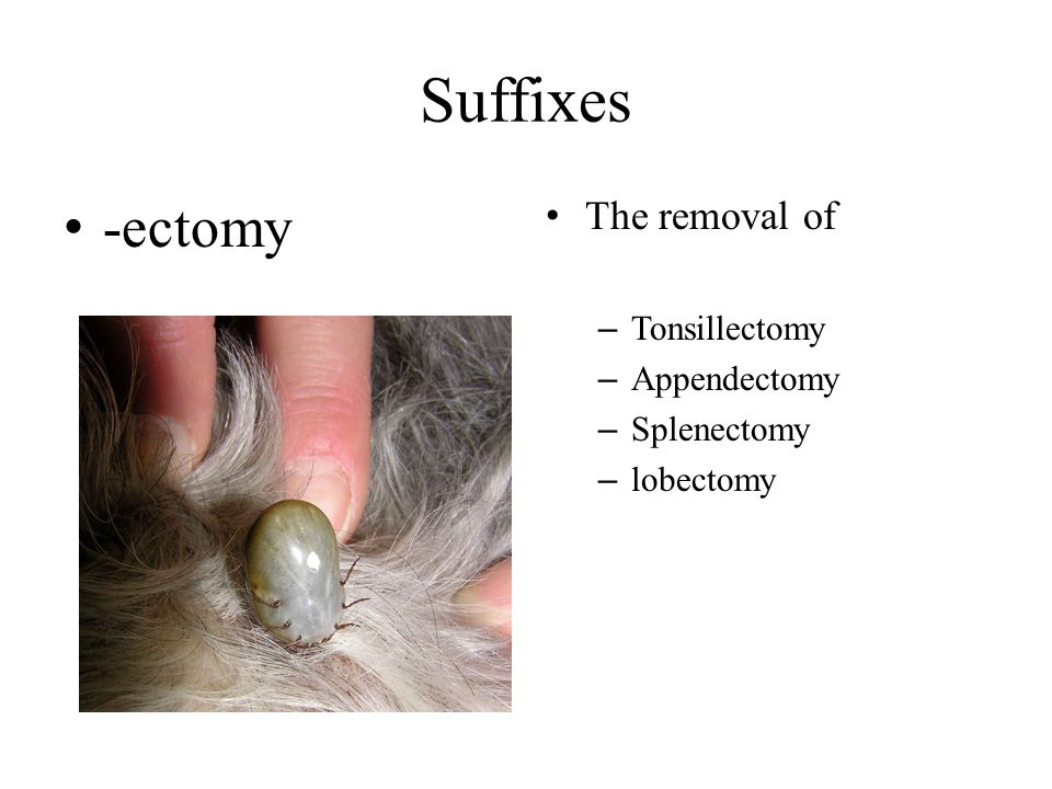 Suffixes -ectomy The removal of – Tonsillectomy – Appendectomy – Splenectomy – lobectomy