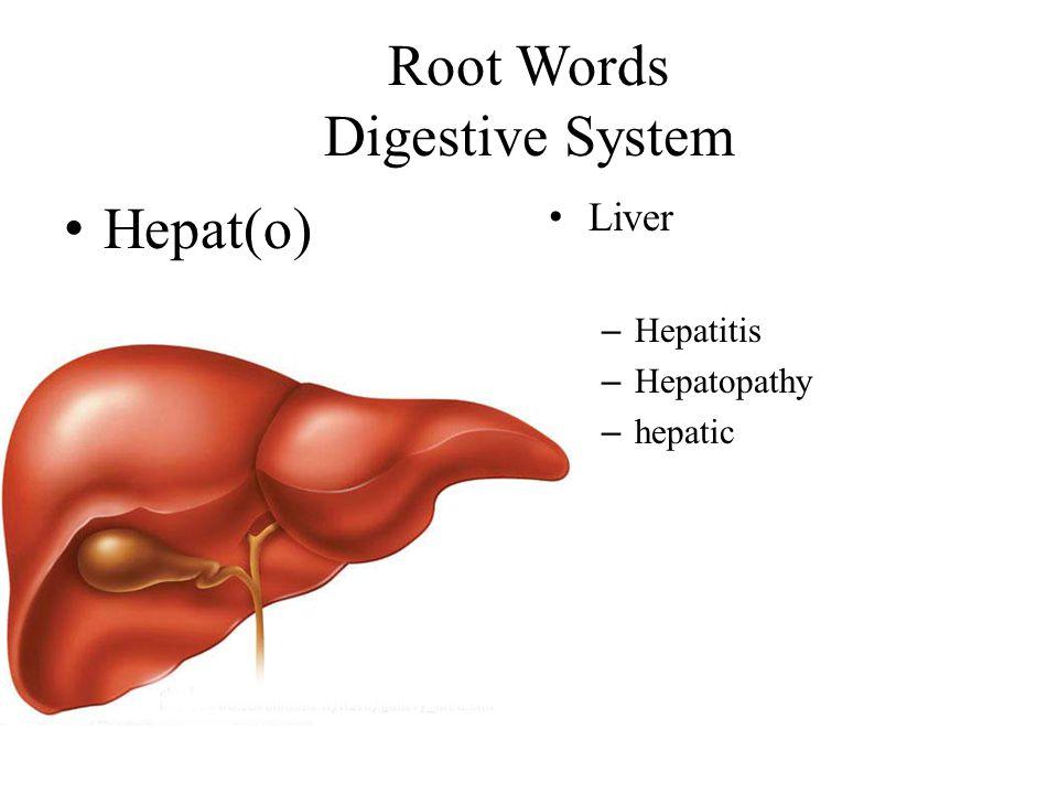 Root Words Digestive System Hepat(o) Liver – Hepatitis – Hepatopathy – hepatic