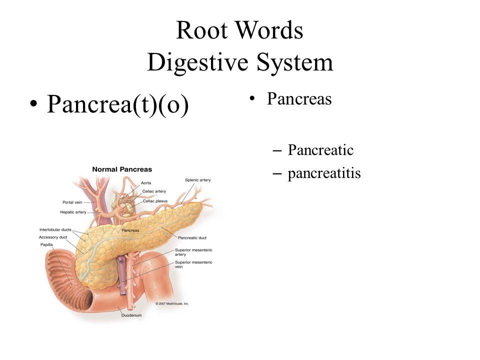 Root Words Digestive System Pancrea(t)(o) Pancreas – Pancreatic – pancreatitis