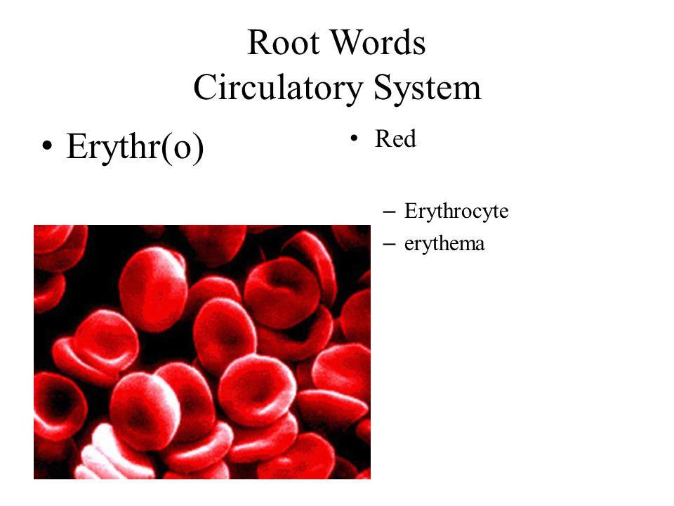 Root Words Circulatory System Erythr(o) Red – Erythrocyte – erythema