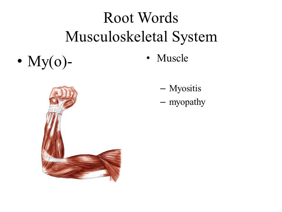 Root Words Musculoskeletal System My(o)- Muscle – Myositis – myopathy