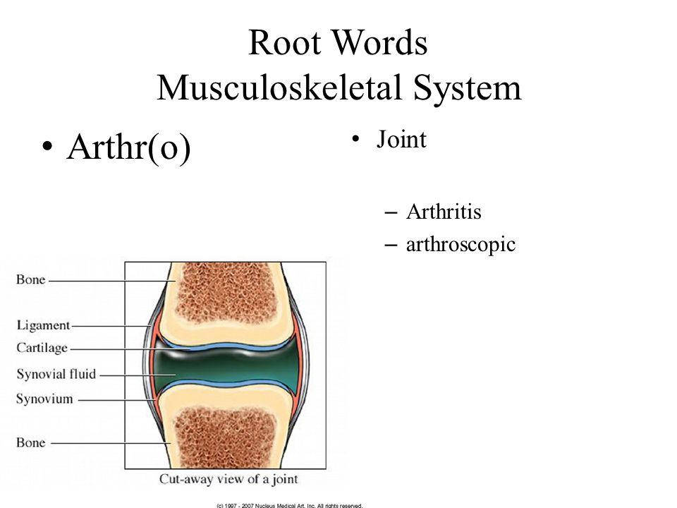 Root Words Musculoskeletal System Arthr(o) Joint – Arthritis – arthroscopic