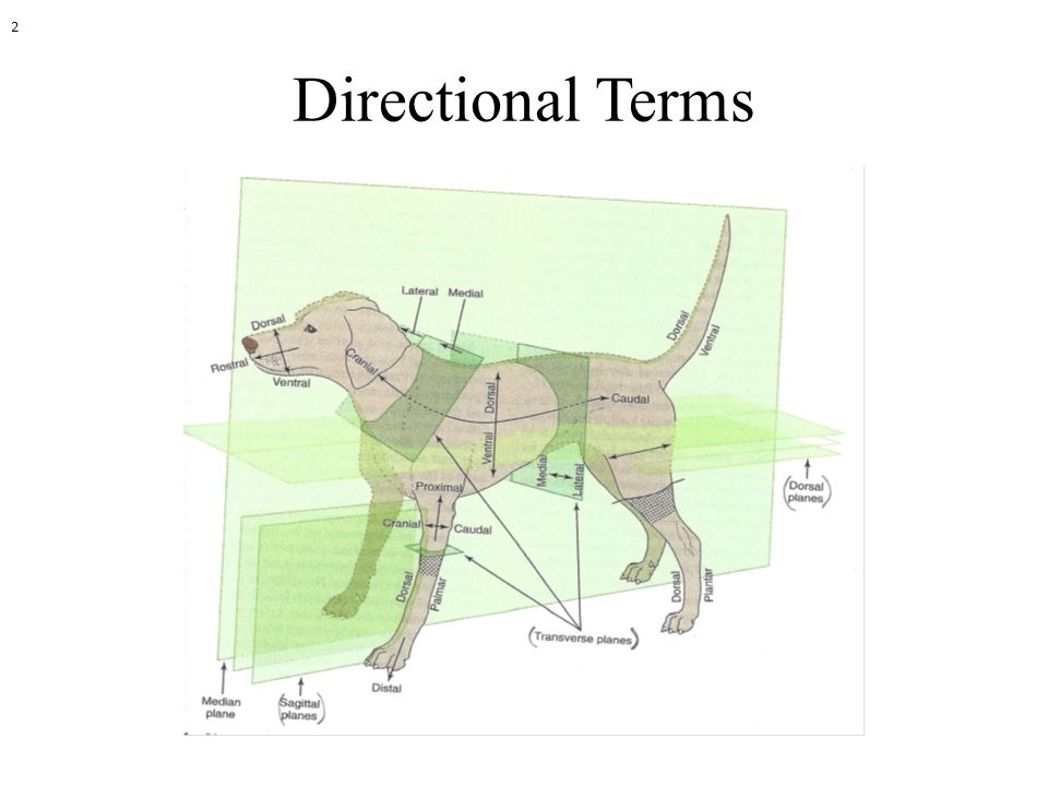 Directional Terms 2