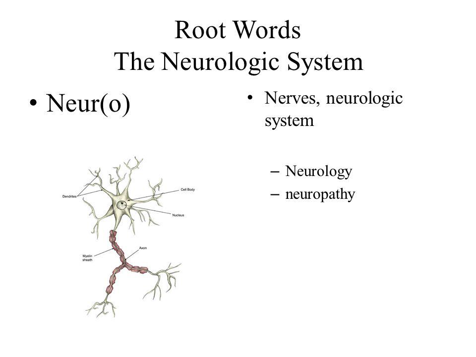 Root Words The Neurologic System Neur(o) Nerves, neurologic system – Neurology – neuropathy