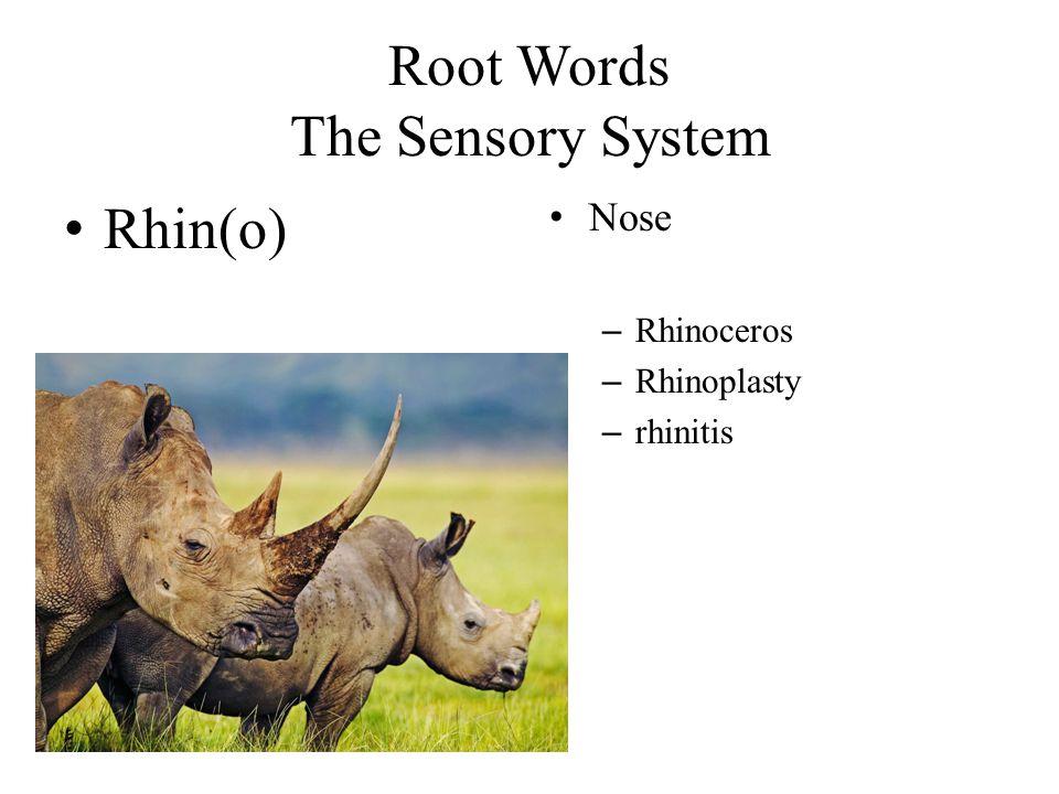 Root Words The Sensory System Rhin(o) Nose – Rhinoceros – Rhinoplasty – rhinitis