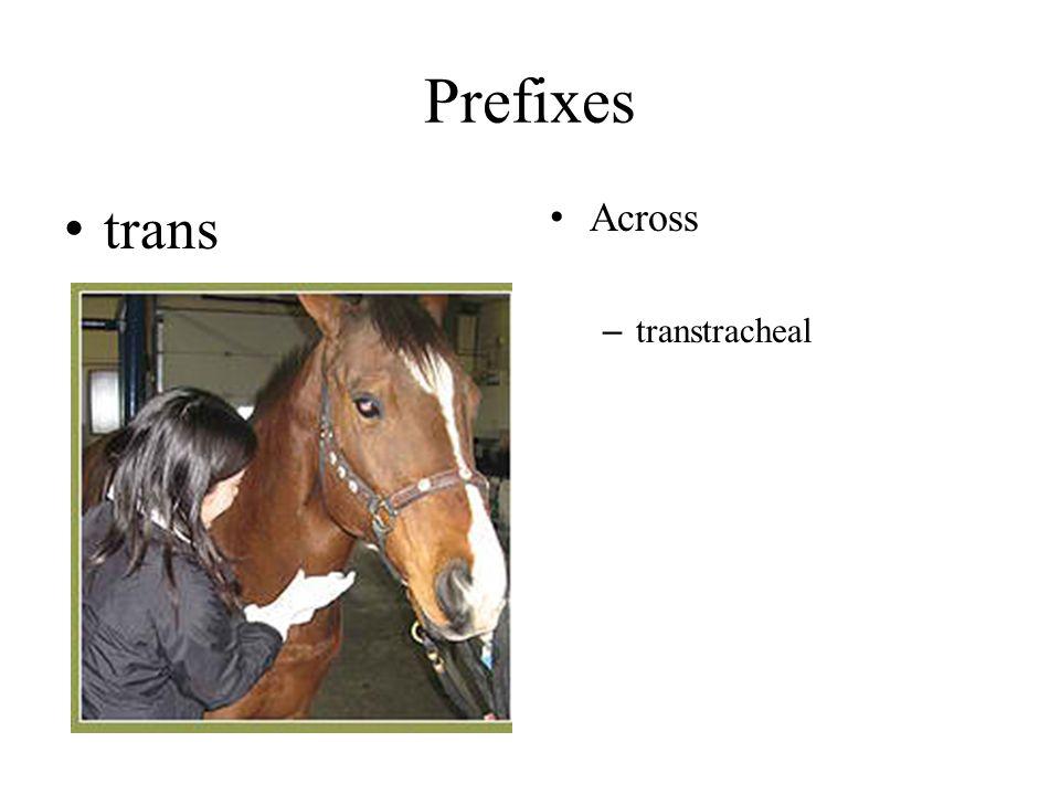 Prefixes trans Across – transtracheal
