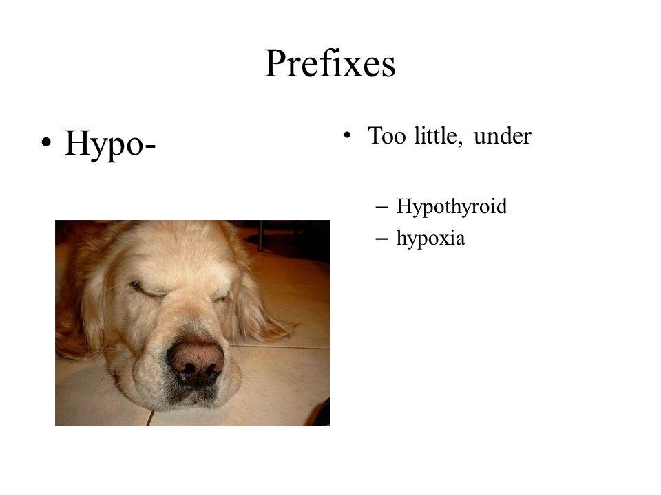 Prefixes Hypo- Too little, under – Hypothyroid – hypoxia