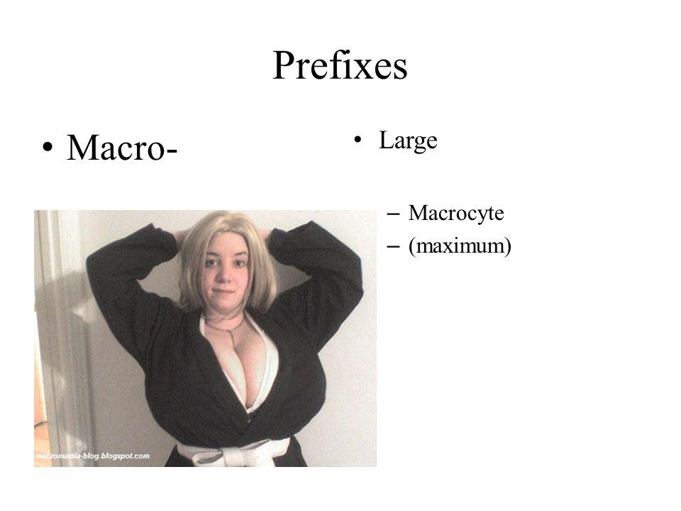 Prefixes Macro- Large – Macrocyte – (maximum)