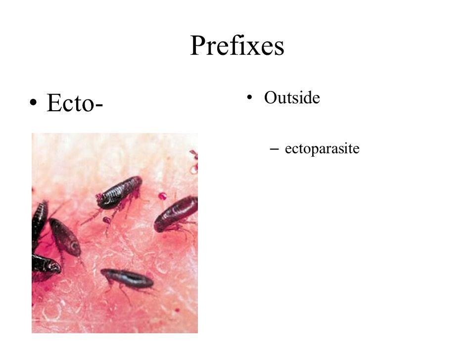 Prefixes Ecto- Outside – ectoparasite
