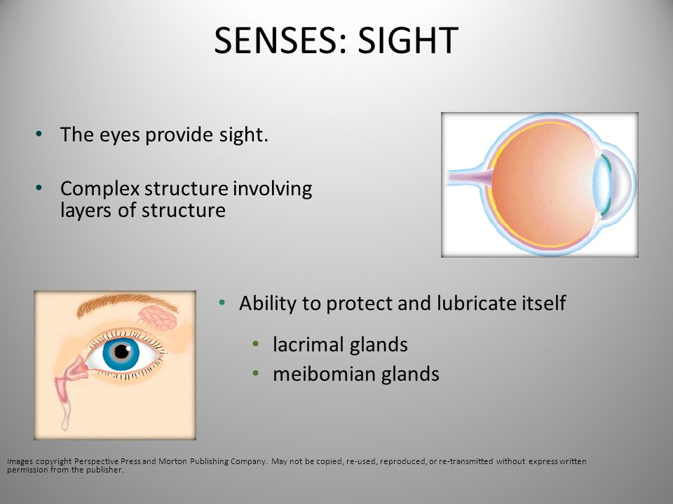 SENSES: SIGHT The eyes provide sight. Complex structure involving layers of structure Ability to protect and lubricate itself lacrimal glands meibomia