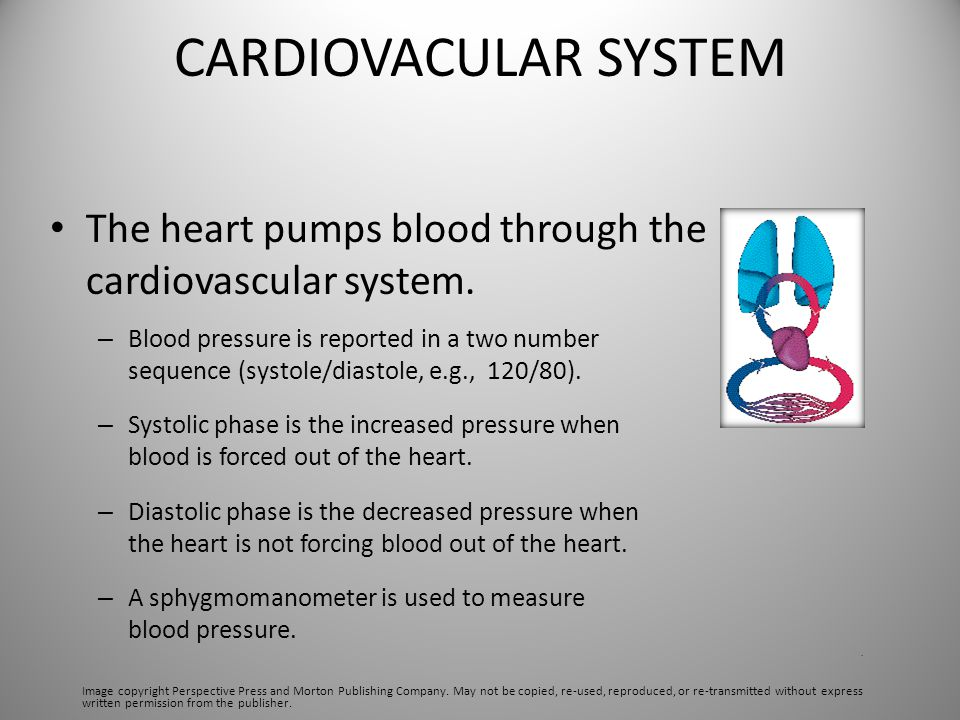 CARDIOVACULAR SYSTEM The heart pumps blood through the cardiovascular system. – Blood pressure is reported in a two number sequence (systole/diastole,