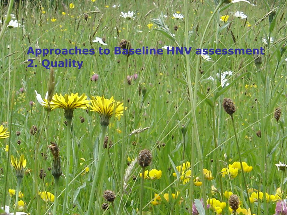 Approaches to Baseline HNV assessment 2. Quality