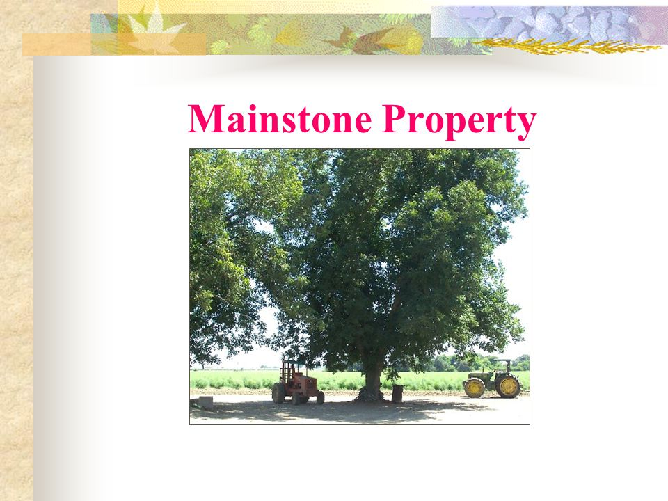 Mainstone Property