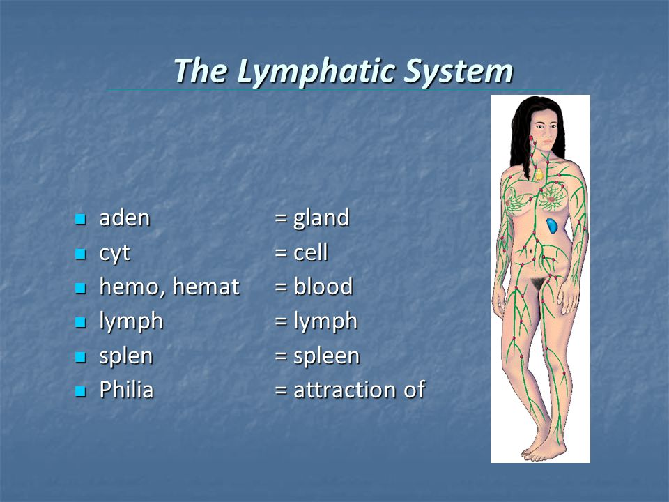 The Lymphatic System aden = gland aden = gland cyt= cell cyt= cell hemo, hemat= blood hemo, hemat= blood lymph= lymph lymph= lymph splen= spleen splen= spleen Philia= attraction of Philia= attraction of