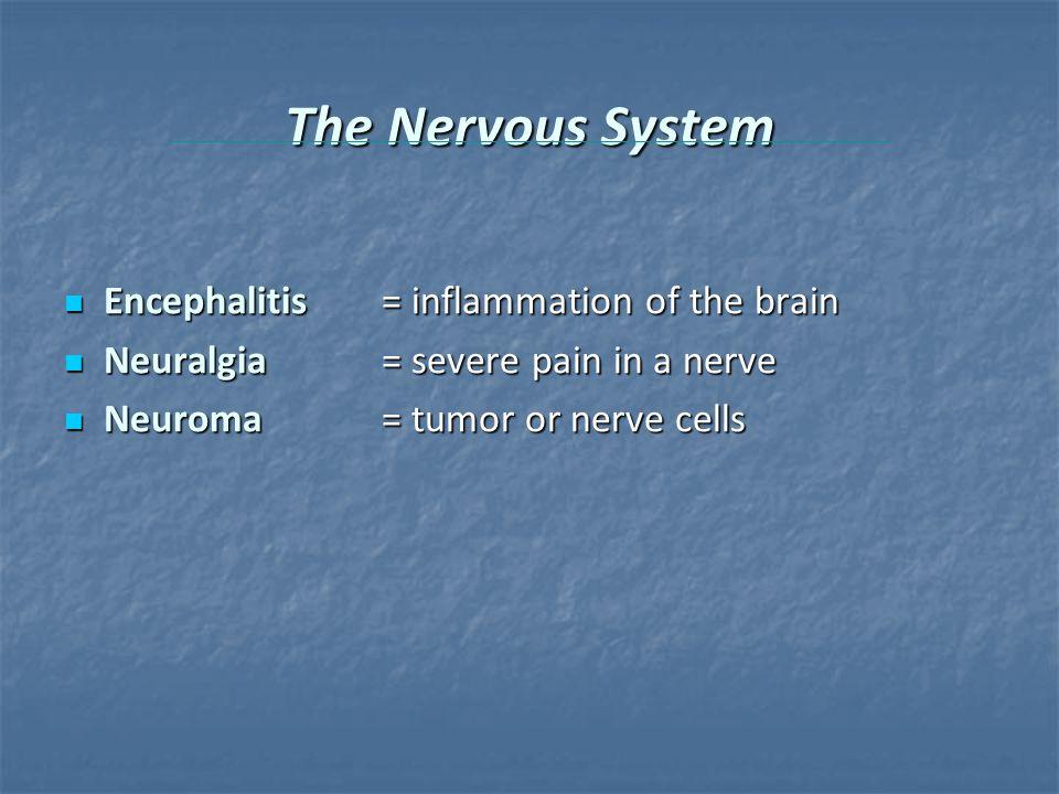The Nervous System Encephalitis = inflammation of the brain Encephalitis = inflammation of the brain Neuralgia= severe pain in a nerve Neuralgia= severe pain in a nerve Neuroma= tumor or nerve cells Neuroma= tumor or nerve cells