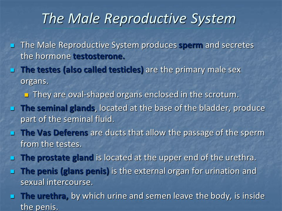 The Male Reproductive System The Male Reproductive System produces sperm and secretes the hormone testosterone.