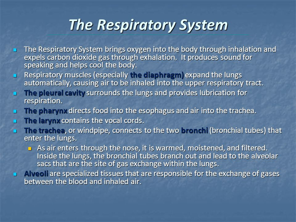 The Respiratory System The Respiratory System brings oxygen into the body through inhalation and expels carbon dioxide gas through exhalation.