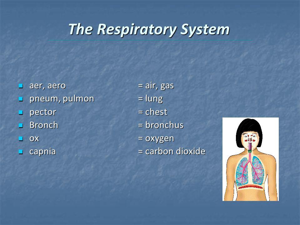 The Respiratory System aer, aero= air, gas aer, aero= air, gas pneum, pulmon = lung pneum, pulmon = lung pector= chest pector= chest Bronch= bronchus Bronch= bronchus ox= oxygen ox= oxygen capnia= carbon dioxide capnia= carbon dioxide