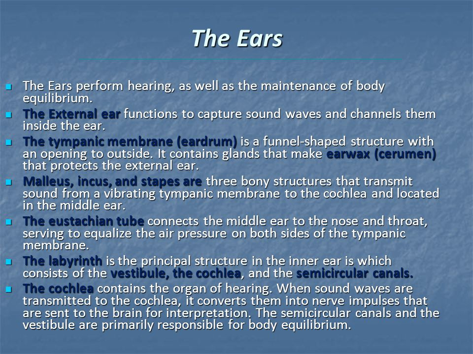 The Ears The Ears perform hearing, as well as the maintenance of body equilibrium.