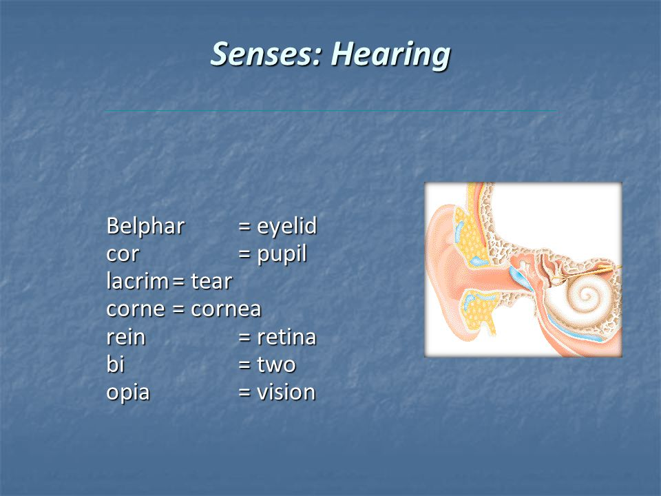 Senses: Hearing Belphar= eyelid cor= pupil lacrim= tear corne= cornea rein= retina bi= two opia= vision