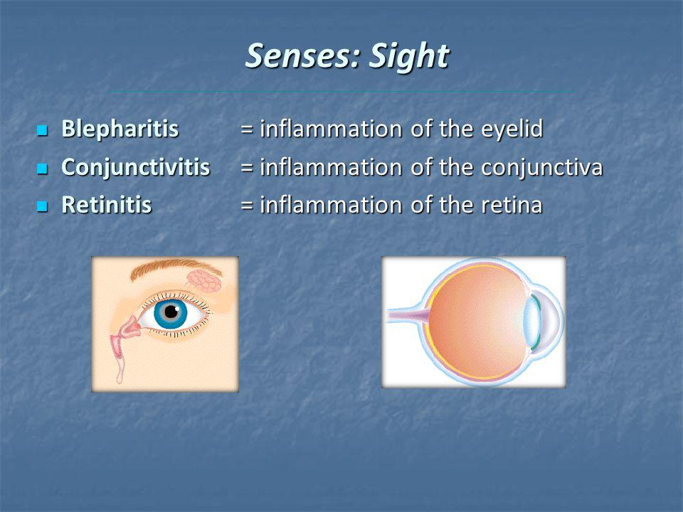 Senses: Sight Blepharitis = inflammation of the eyelid Blepharitis = inflammation of the eyelid Conjunctivitis = inflammation of the conjunctiva Conjunctivitis = inflammation of the conjunctiva Retinitis = inflammation of the retina Retinitis = inflammation of the retina